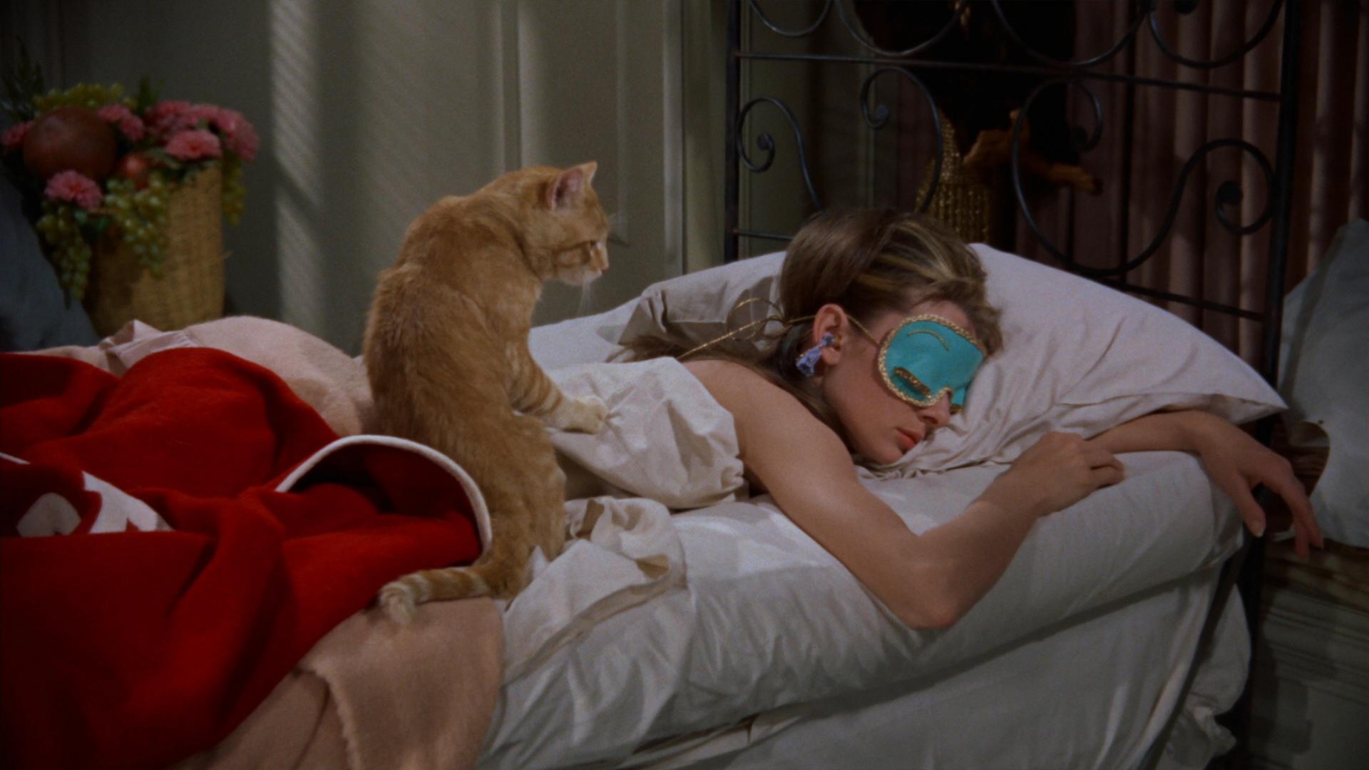 El gato cuidando el sueño.