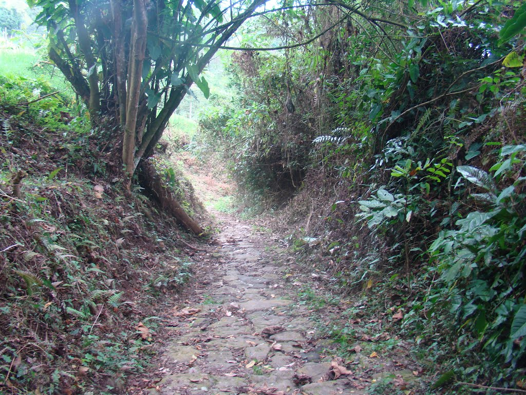 Camino de herradura. Foto: Milton Torres