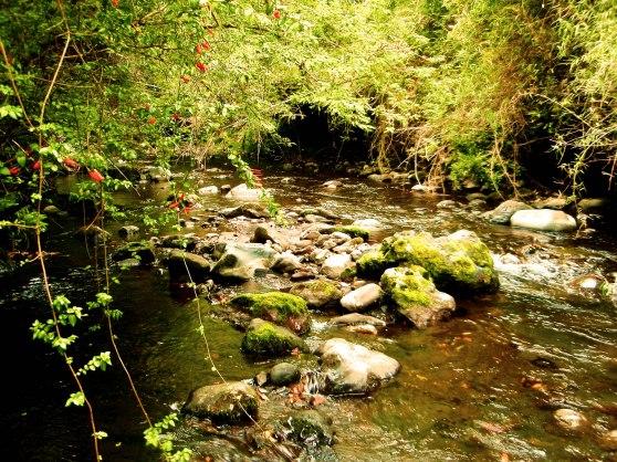Río Ñilfe. Foto por Rayen Praihuán.