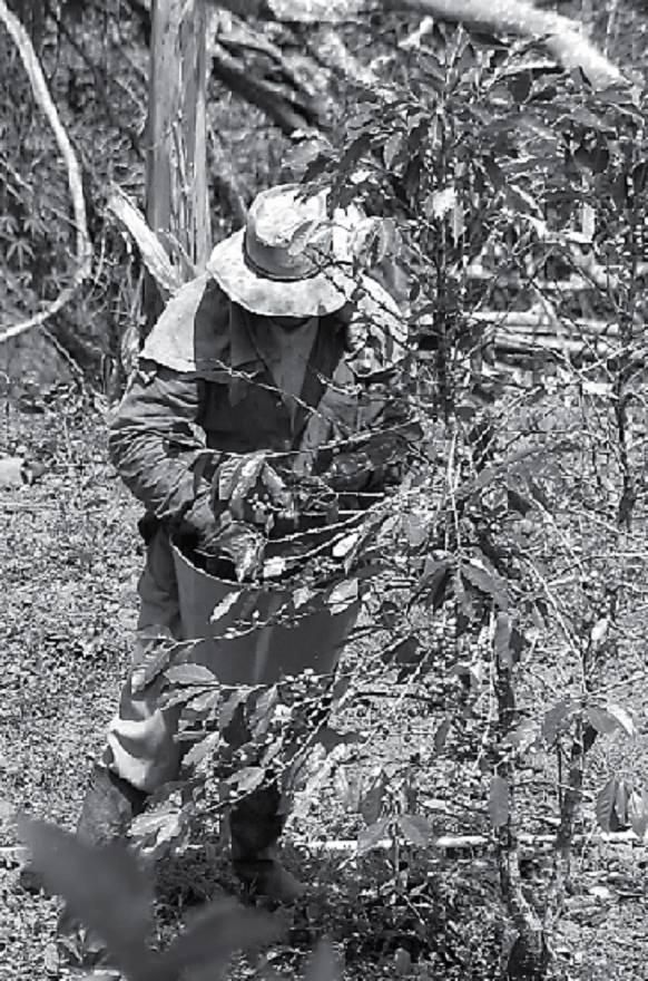 Campesino cerca de Pereira, Años 70, Revista Literariedad